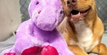 This Shelter Dog Wouldn't Stop Stealing This Stuffed Unicorn, Now He Gets To Keep It!